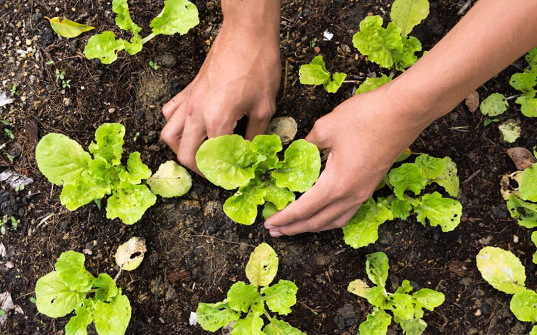 Join GreenFare at the JK Community Farms PlantaThon!